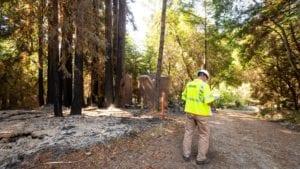 An Xfinity technician examines a forest