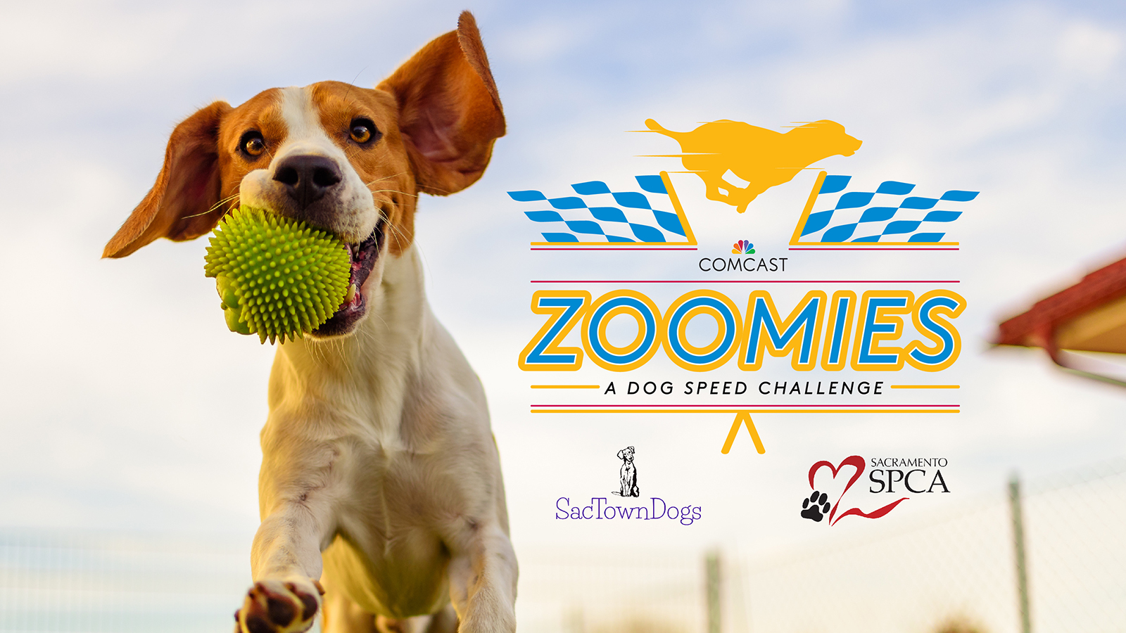 Comcast Zoomies: Dog Speed Challenge Debuts to Support Sacramento SPCA and Show Off Speedy Pups