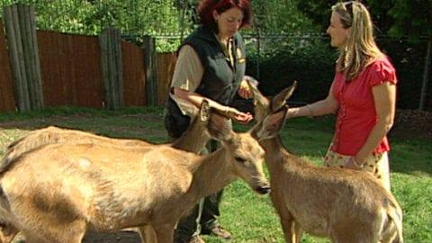 Sabrina Register with deer