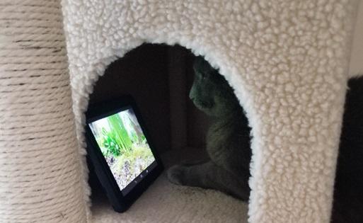 Cat watching tv